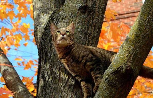 Picture Tree, Cat, Autumn, Fall, Tree, Autumn, Cat