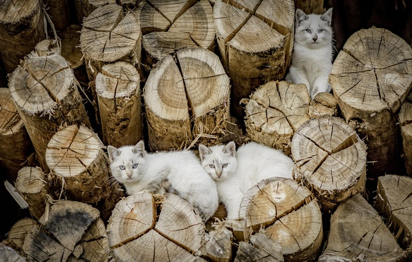 Picture cats, cats, logs
