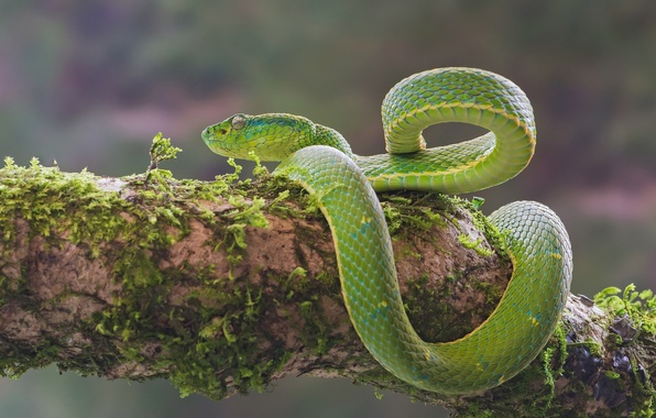 Picture moss, snake, green
