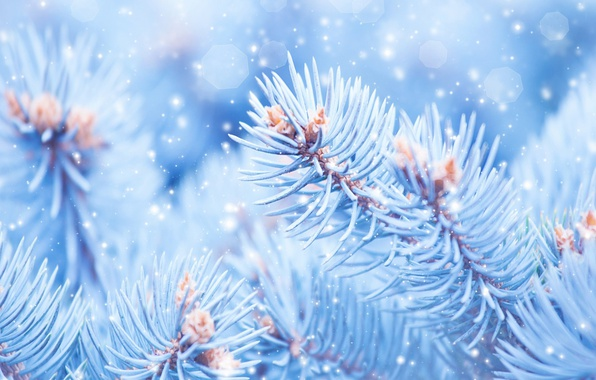 Picture macro, Nature, Snow, Branches, Spruce