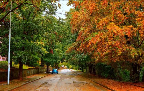 Picture Road, Autumn, Trees, Machine, Car, Fall, Foliage, Autumn, Road, Trees, Leaves
