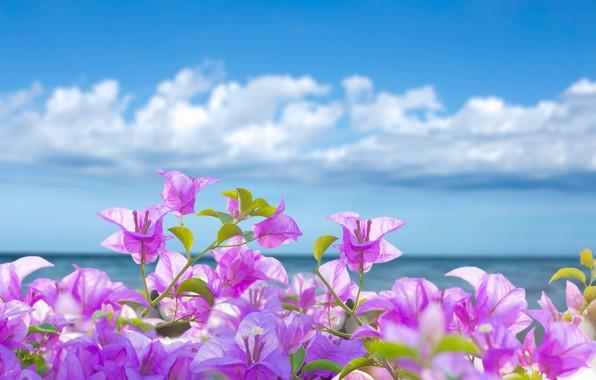 Picture sea, beach, summer, the sky, the sun, flowers, summer, pink, sunshine, beach, sky, sea, pink, …