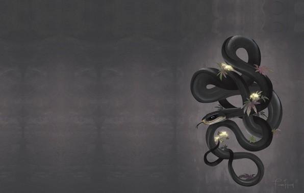 Picture snake, branch, art, Black Mamba, Mamba, FionaHsieh