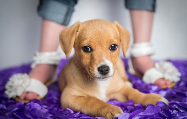 Picture background, dog, puppy