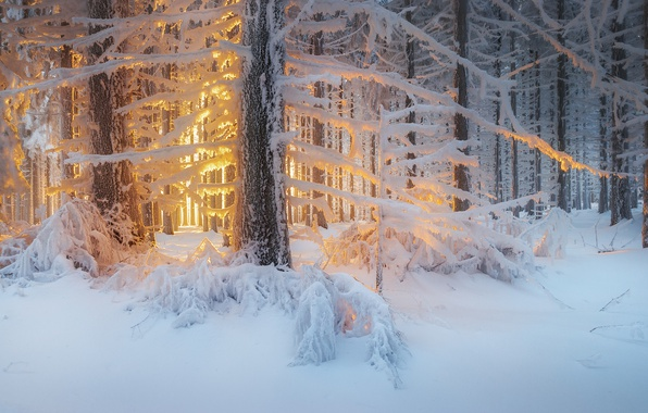 Picture winter, forest, light, snow, trees, nature