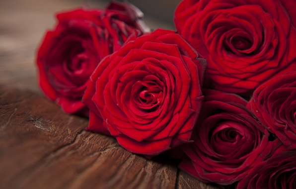 Picture red, flowers, roses, red roses