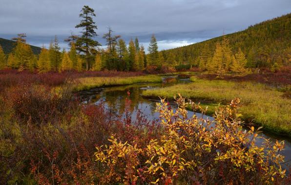 Picture autumn, Kolyma, stream Unknown