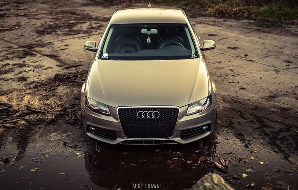 Picture Audi, Auto, Audi, Forest, Machine, The hood, Dirt, Sedan, Car, Sedan, The front, Audi A4, …