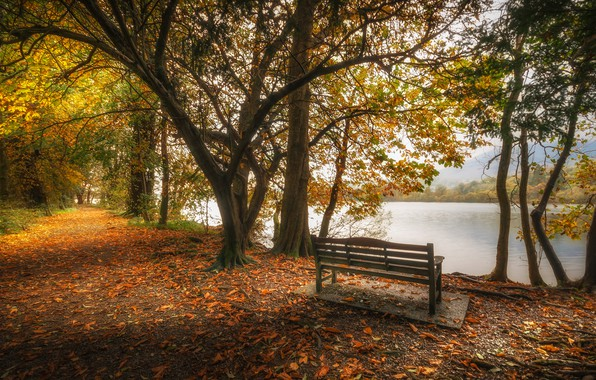 Picture autumn, leaves, trees, lake, pond, Park, England, bench, Cumbria