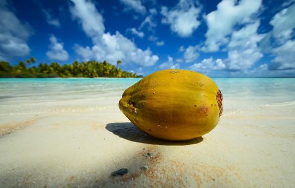 Picture sea, beach, nature, palm trees, coast, blue sky