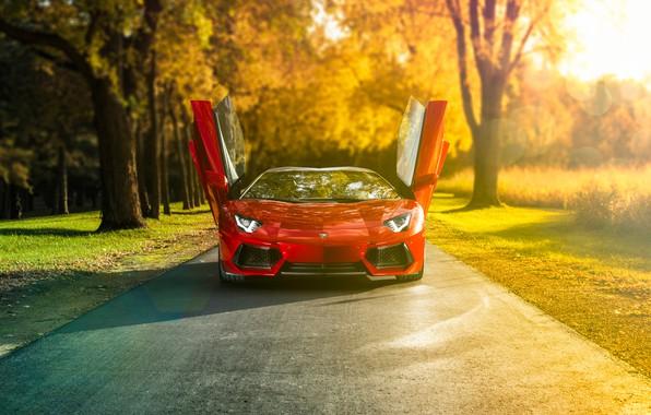 Picture car, Lamborghini, red, supercar, road, trees, sunrise, natural light