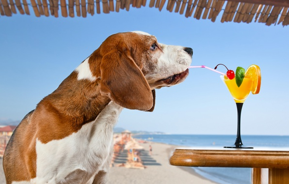 Picture sea, beach, the sun, cherry, orange, the situation, dog, humor, horizon, cocktail, lime, tube, drink, ...