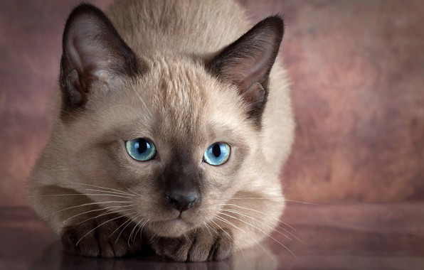 Picture eyes, look, animal, cub, kitty, Anna Verzina, Anna Varzina