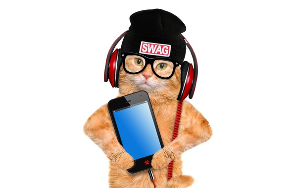 Picture cat, hat, photoshop, humor, headphones, red, glasses, white background, smartphone