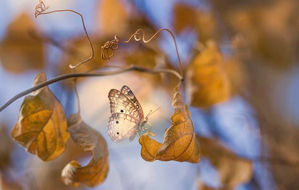 Picture autumn, leaves, macro, branches, butterfly, Eleonora Di Primo