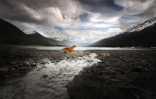 Picture mountains, dog, running, Alaska Adventure