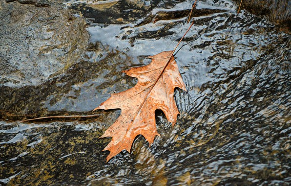 Picture Water, Stream, Autumn, Leaf, Fall, Water, Autumn, Leaf, Flow