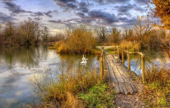 Picture autumn, trees, landscape, birds, nature, pond, grass, the bridge, swans, the bushes