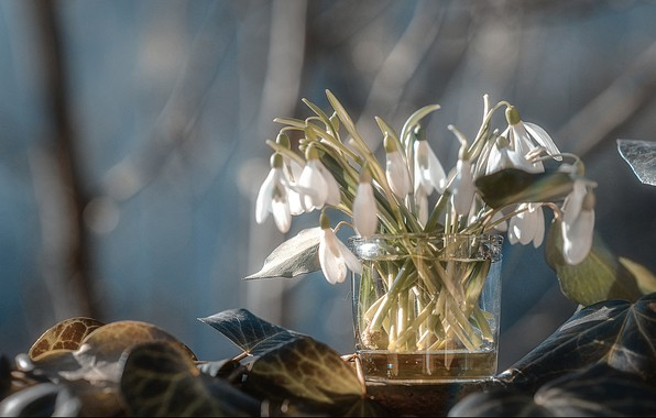 Picture leaves, flowers, nature, glass, spring, snowdrops