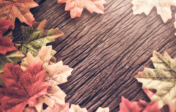 Wallpaper autumn, leaves, background, tree, wood, background, autumn, leaves, autumn, maple