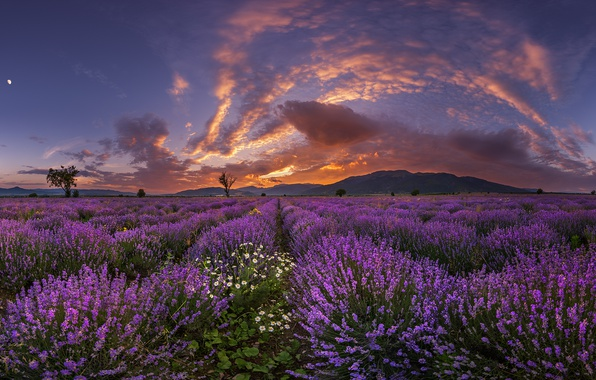 Photo wallpaper field, the sky, clouds, mountains, the evening, lavender