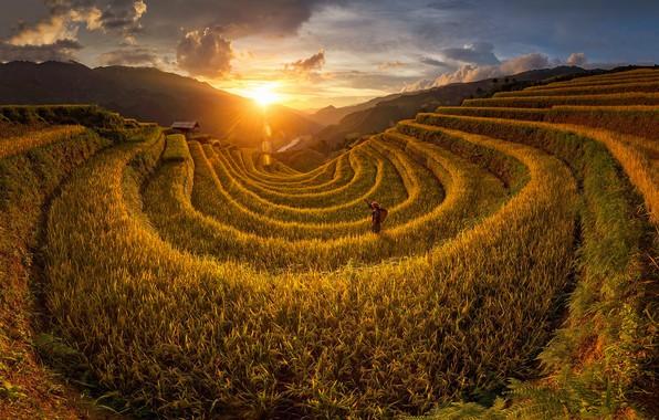 Picture the sun, light, people, field, Vietnam