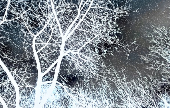 Picture trees, night, rendering, branch, snowfall, black and white, late autumn, bad weather