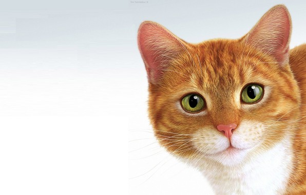 Picture minimalism, cat, Eric Tranchefeux, Pussy, ginger