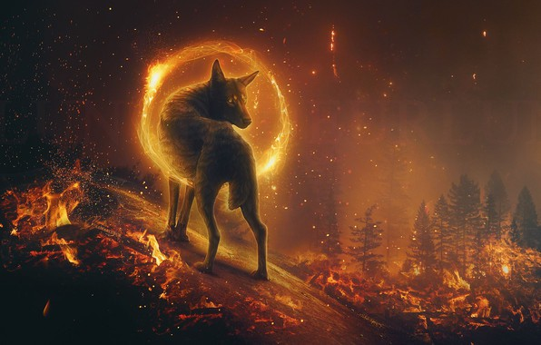 Picture Night Fantasy Fiction Fire Magic Wolf Beauty Mystic