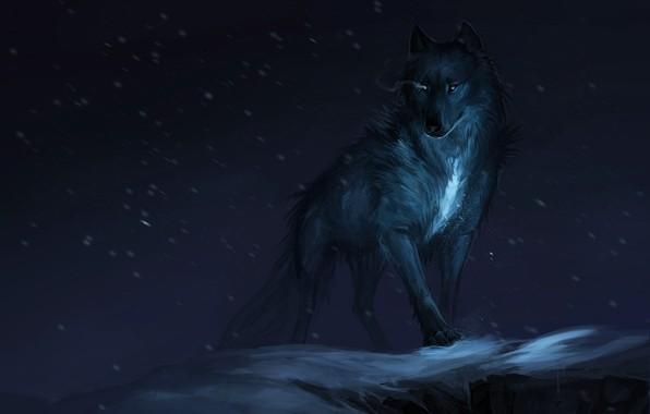 Picture background, wolf, predator, beast