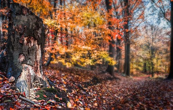 Picture autumn, forest, stump