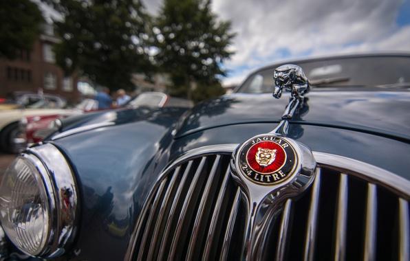 Picture macro, Jaguar, headlight, the hood, grille
