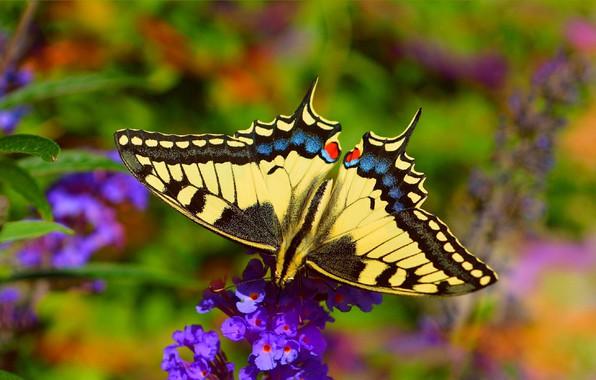 Picture flower, Macro, Butterfly, Macro, Butterfly