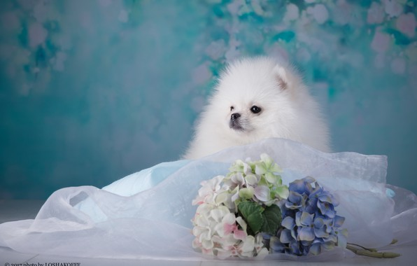 Picture flowers, background, baby, Puppy, fabric, bokeh