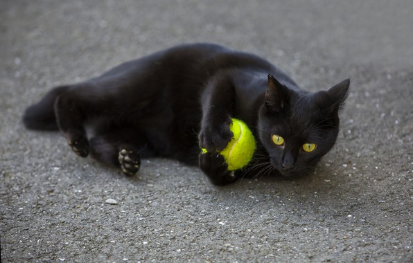 Picture eyes, cat, look, black, the ball