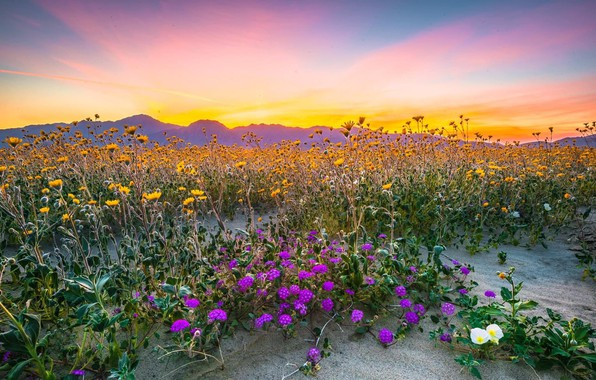 Picture sunset, flowers, meadow