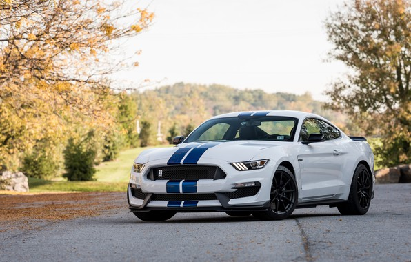 Picture Shelby, Blue, White, GT350, Strips