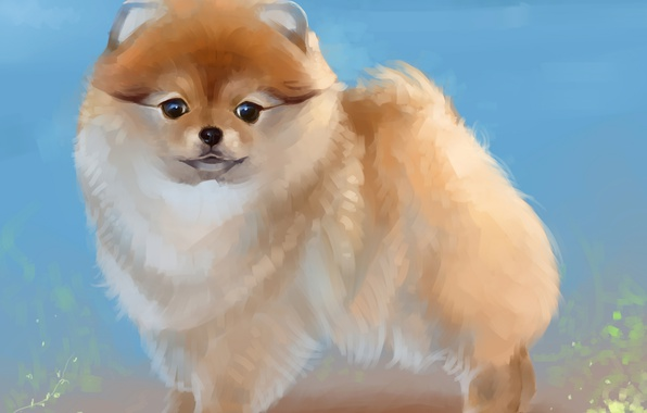 Picture figure, dog, art, painting, dogs, Spitz, spitz