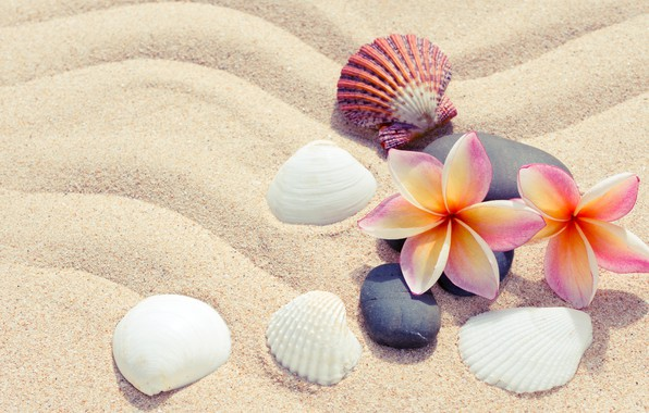 Picture sand, beach, summer, flowers, stones, shell, summer, beach, flowers, sand, plumeria, plumeria, pebbles, seashells