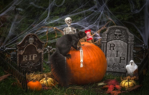 Picture holiday, web, protein, pumpkin, the bare bones