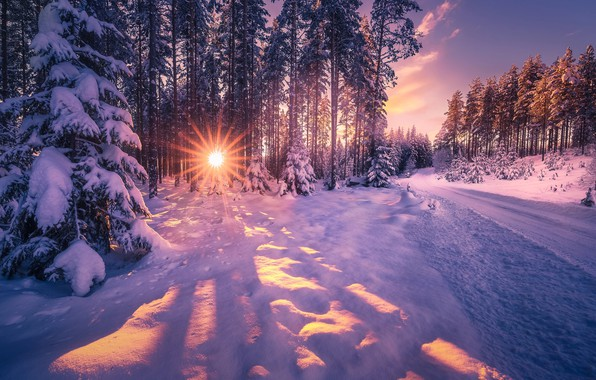 Picture winter, road, the sun, rays, trees, landscape, nature, ate, snow