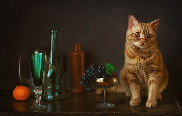 Picture glass, grapes, bottle, Mandarin, red cat, cat
