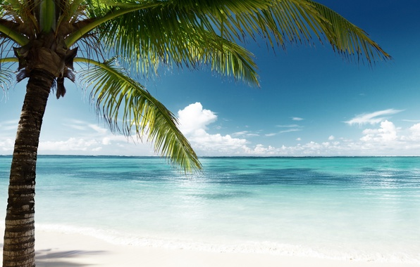 Picture sand, sea, beach, the sun, palm trees, shore, island, summer, beach, sea, island, sand, paradise, ...