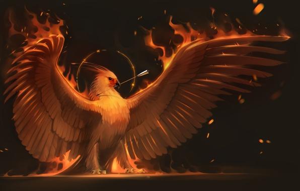 Picture fire, bird, wings, art, arrow, Phoenix, phoenix