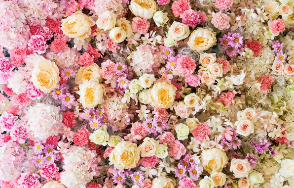 Picture flowers, background, roses, pink, buds, pink, flowers, roses, bud