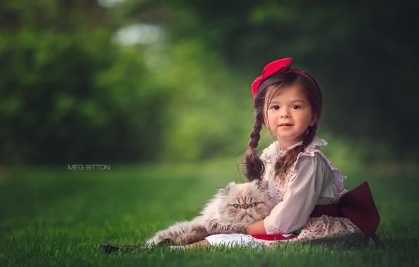 Picture cat, grass, girl, braids, kitty, bokeh
