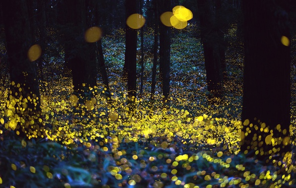 Picture forest, night, fireflies, the evening, bokeh