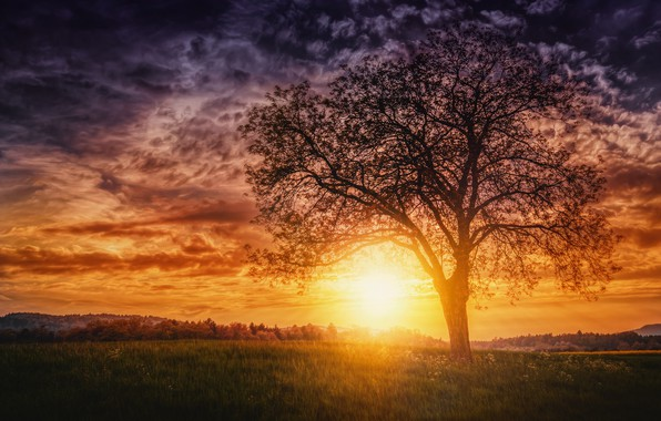 Picture the sun, sunset, tree, the evening