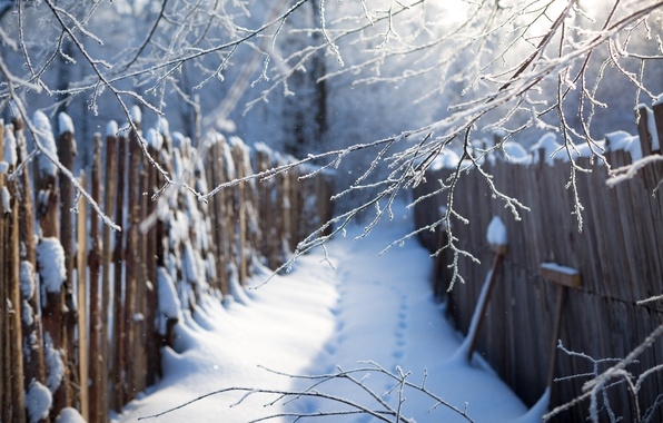 Picture winter, snow, blue, traces, the fence, branch, the snow