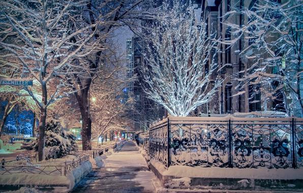 Picture winter, snow, trees, street, Chicago, Il, Chicago, Illinois
